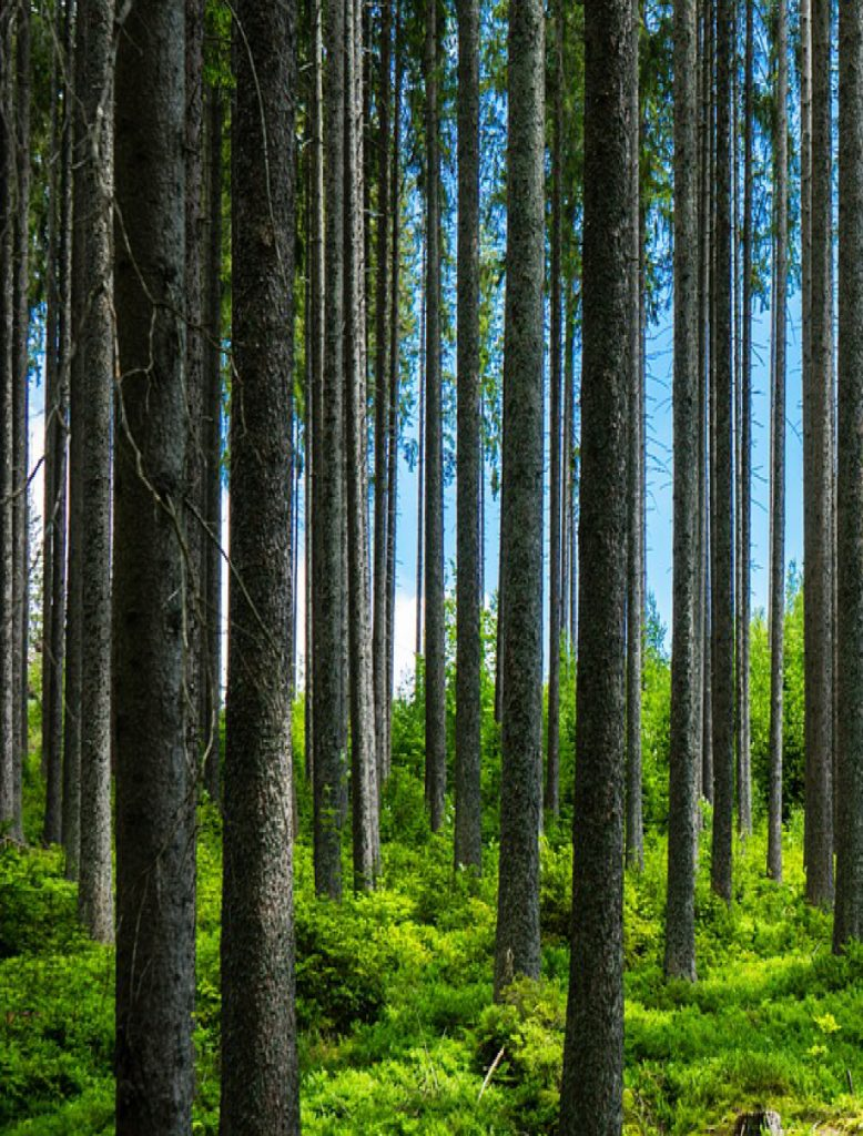 Forest value sustainable development