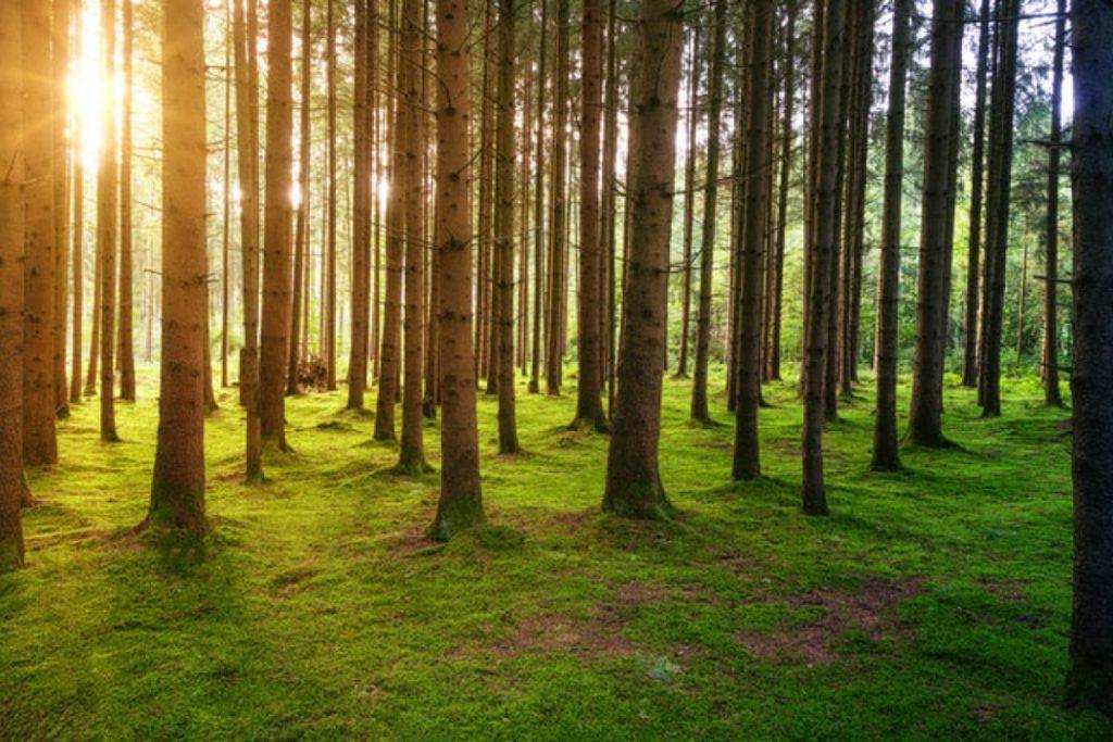 Tila-arvio metsäsuunnitelma